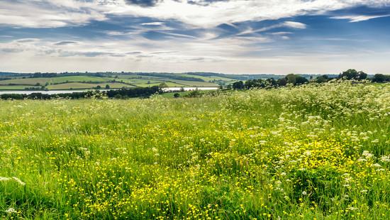 Meadow  by rjb71