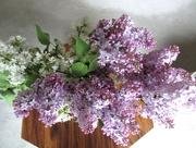 25th May 2018 - Lilac