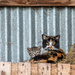 Farmyard cats