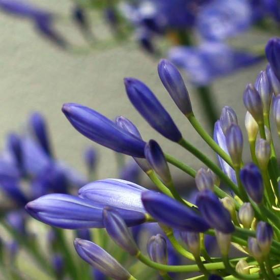 same flower, different crop by dmdfday