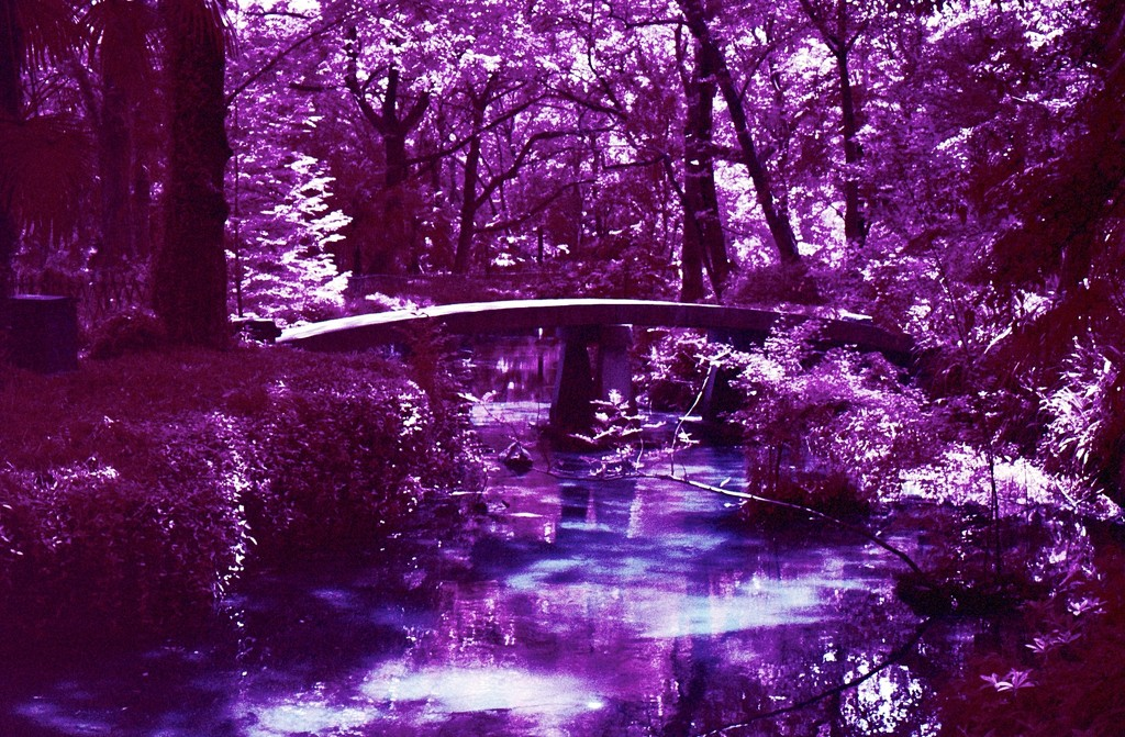 Forest bridge by peterdegraaff