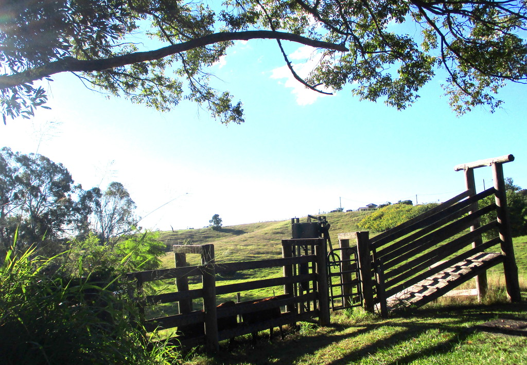 Cattle ramp on the Range by 777margo