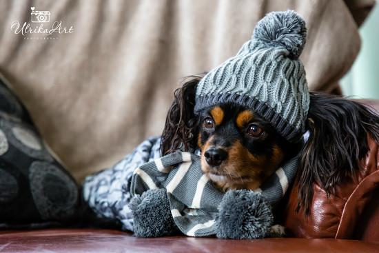 Winter ready... by ulla