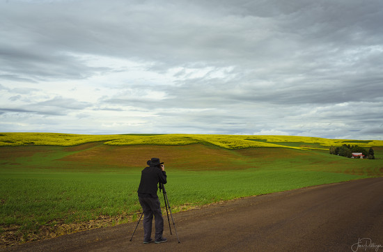 Taffy and the Canola Fields by jgpittenger