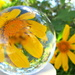 Japanese daisie in a crystal ball by 777margo