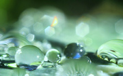 27th May 2018 - because glistening dew is fabulous