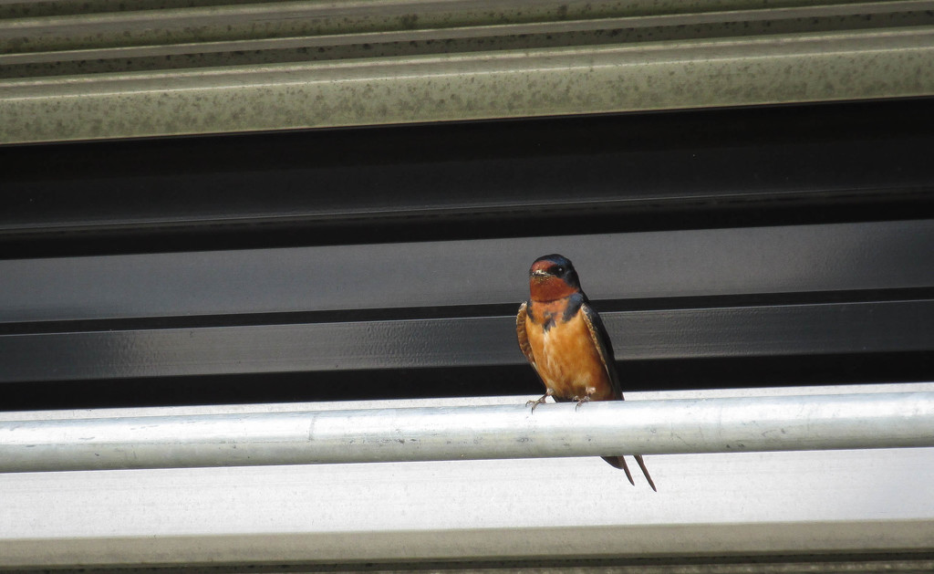 A little bird by mittens