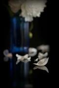 27th May 2018 - 2018-05-27 petal thoughts