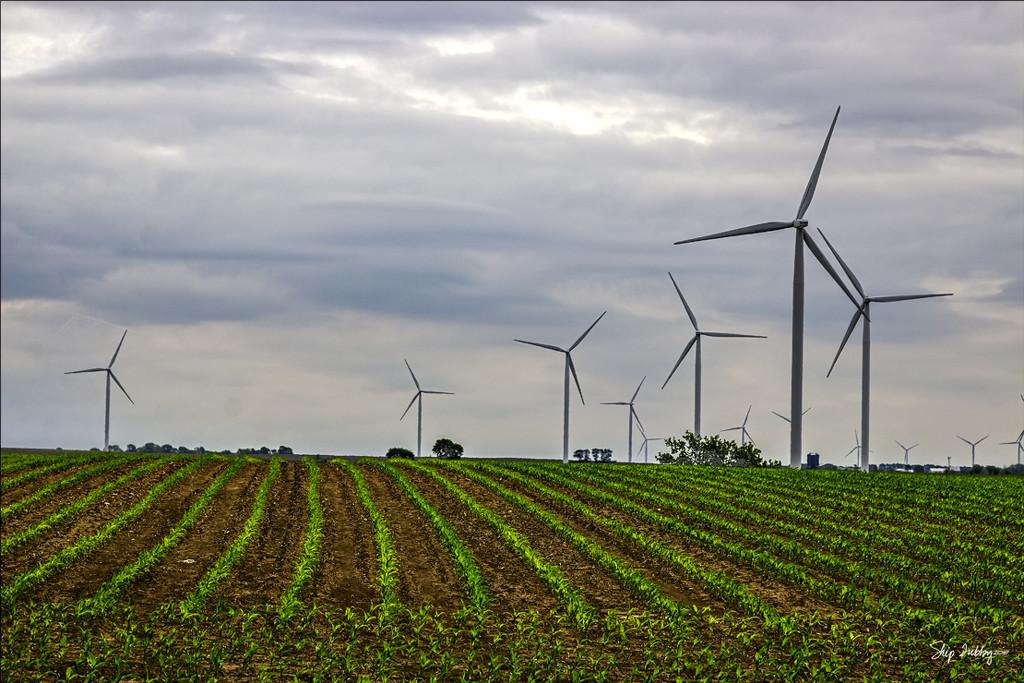 Corn and Windmills by skipt07