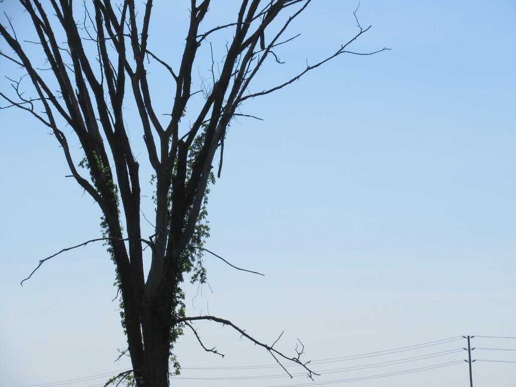 Tall tree by bruni