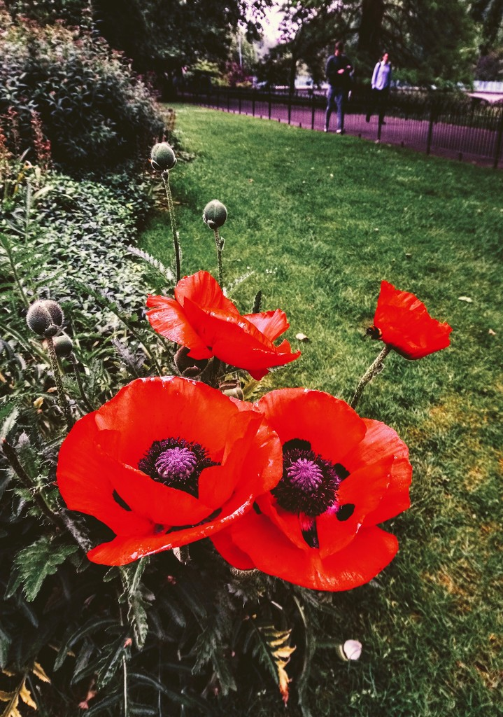 Overprocessed poppies by boxplayer