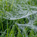 Webs and Dew in the grass
