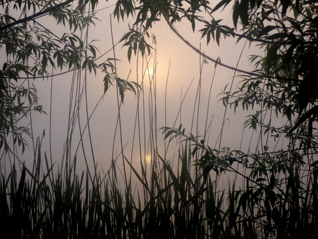Sun rising through the mist... by julienne1