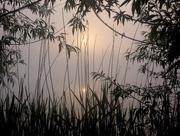 28th May 2018 - Sun rising through the mist...