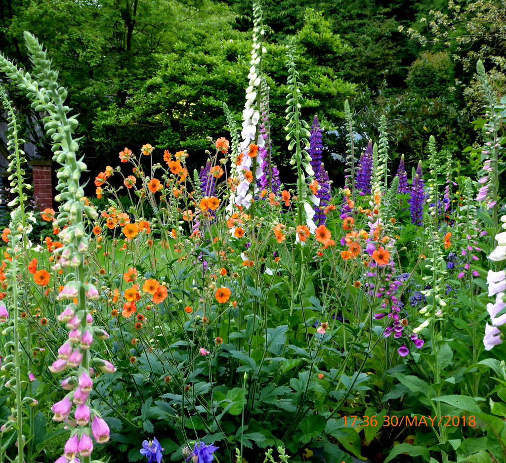 Summer flowers.. by snowy