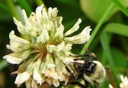 30th May 2018 - Bee Face