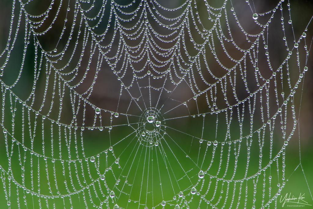 Cobweb Jewellery by yorkshirekiwi