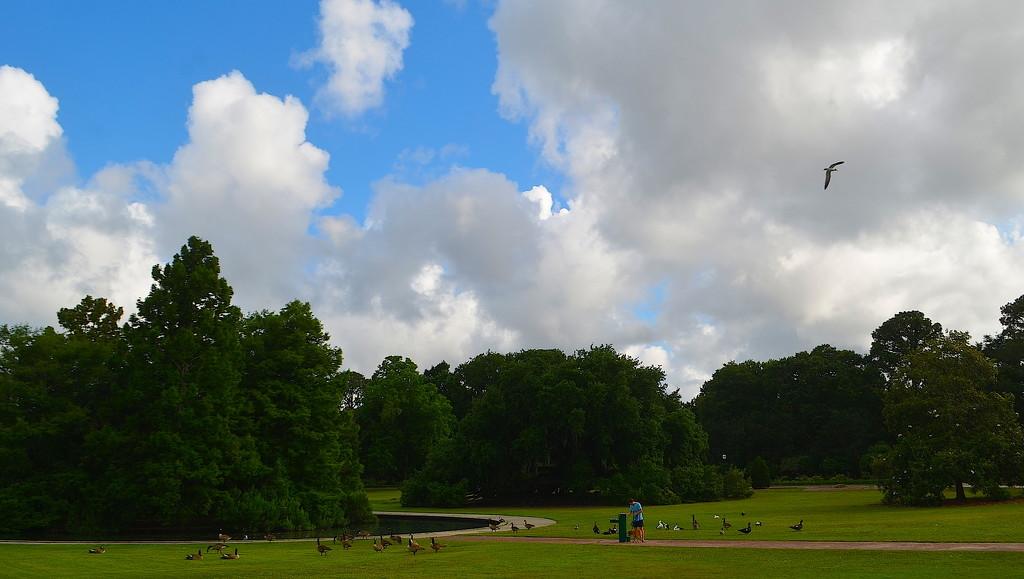 Summer clouds at Hampton Park, Charleston, SC by congaree