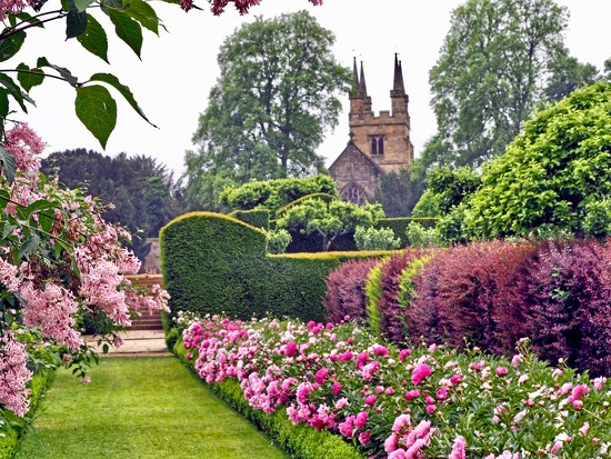 Pink Peonies at Penshurst Place  by suesmith