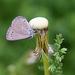Unsidedown butterfly! by fayefaye