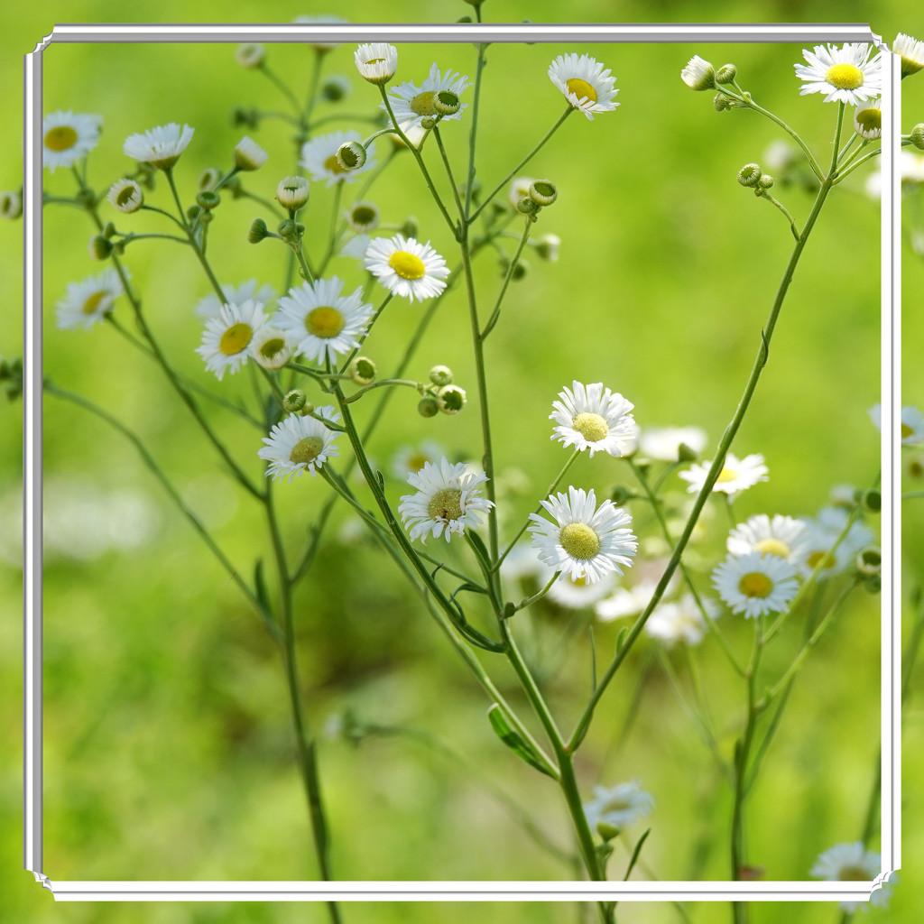 Looks Like Spring - Feels Like Summer by milaniet