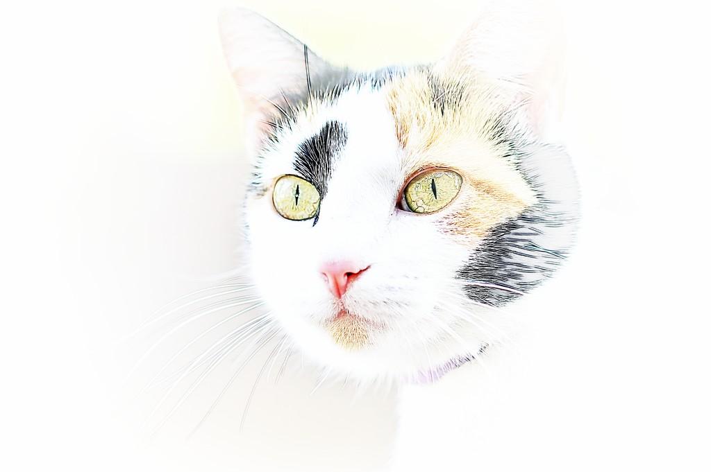 Cat by lynnz