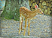 31st May 2018 - Little Fawn