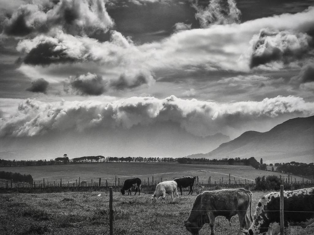 My first attempt at B&W by ludwigsdiana
