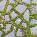 June Words:  Garden:  A Tangled Web by casablanca