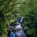 Wairere Falls Walk by yorkshirekiwi