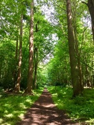 1st Jun 2018 - Woodland Walk
