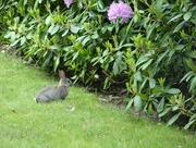 2nd Jun 2018 - Little rabbit