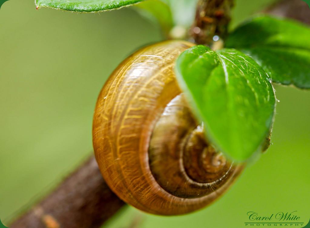 Garden Enemy by carolmw