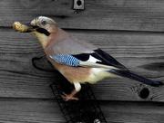 2nd Jun 2018 - 02-06 bird