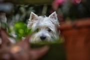 2nd Jun 2018 - George peeping through the flower pots