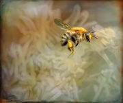 2nd Jun 2018 - Bee flying - edit