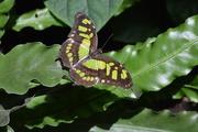 2nd Jun 2018 - butterfly