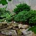 June Words - Garden