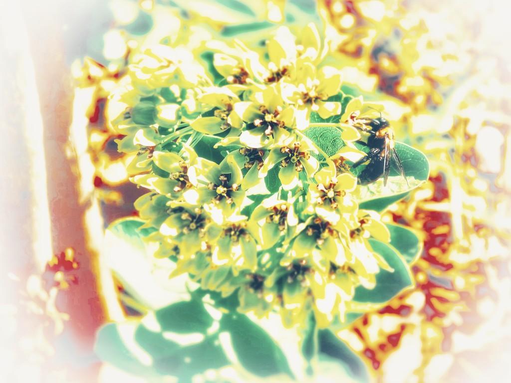 The  bee in high key by louannwarren
