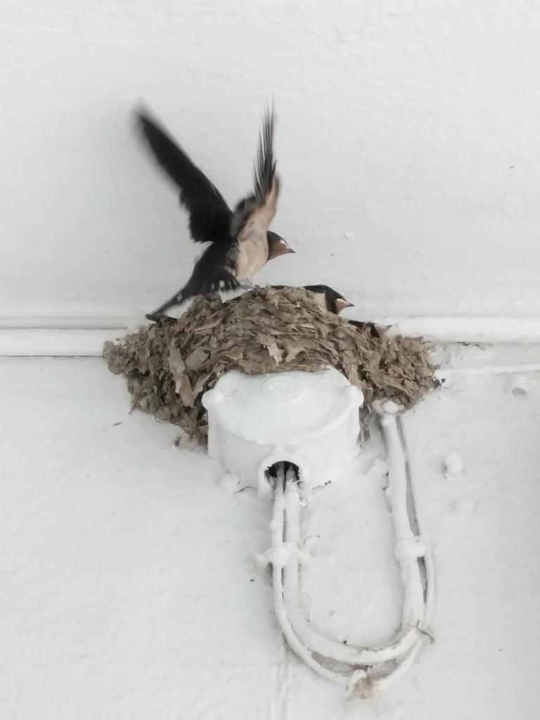 Swallows Readying for Flight by 30pics4jackiesdiamond