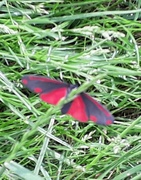 3rd Jun 2018 - It's a moth