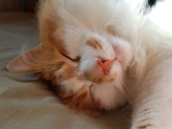 Sleepy ginger by katriak