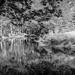 Merriland River by joansmor
