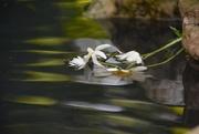 4th Jun 2018 - Submerged daisies.....
