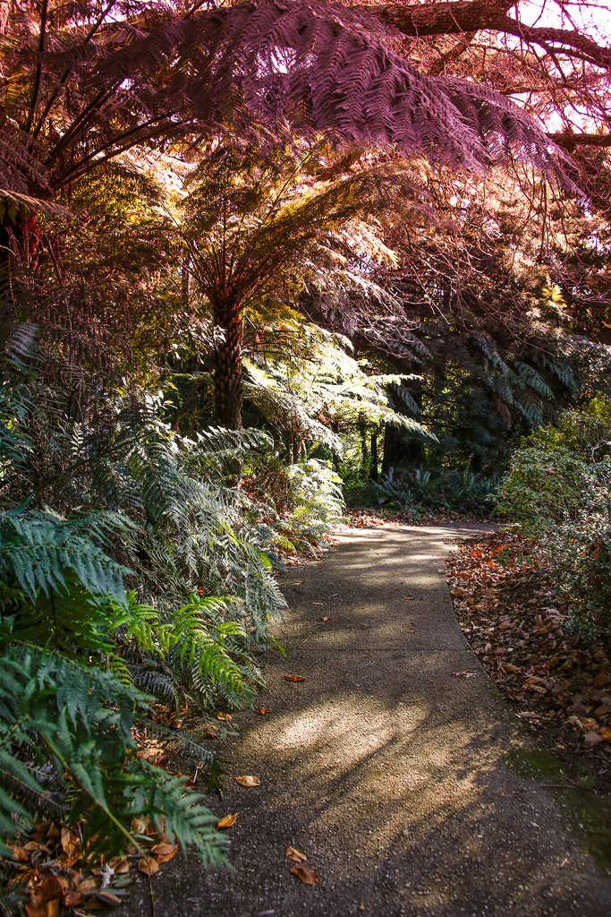 Tranquil Walk by purdey