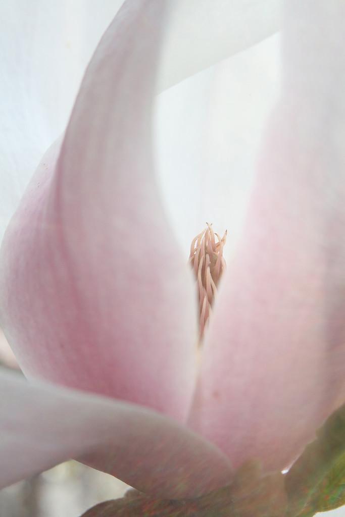 Magnolia Secrets by pdulis