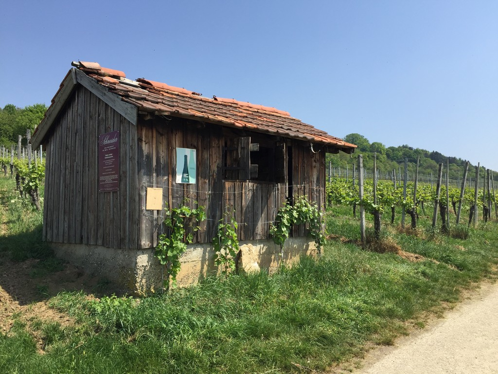 Wooden house in the german vineyards. by cocobella