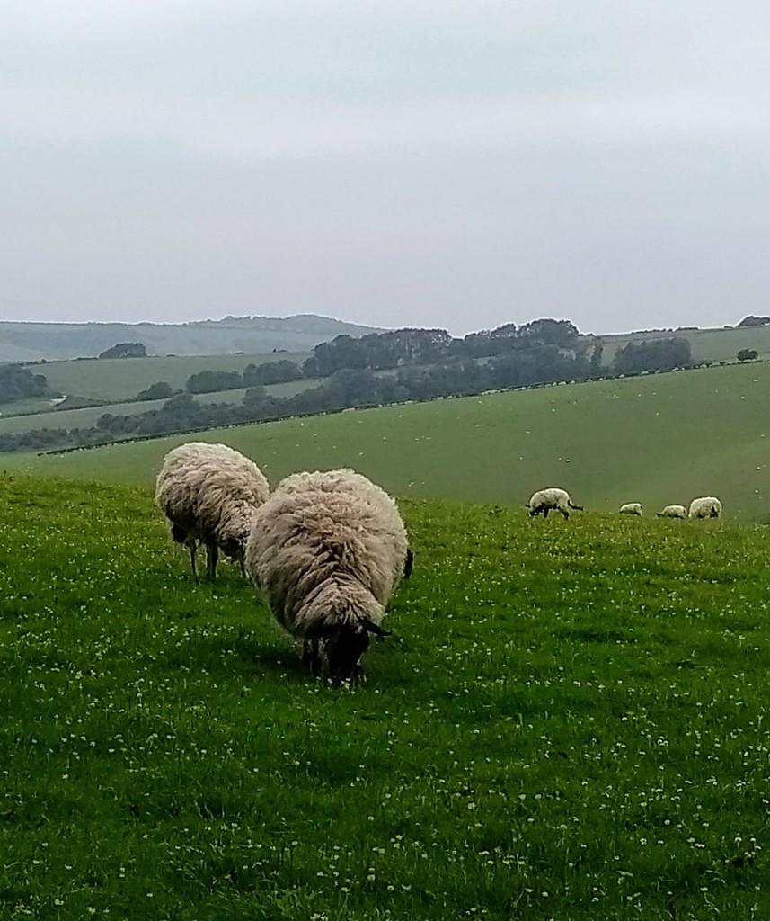 """Mmmm, Grass. My favourite."" by 4rky"
