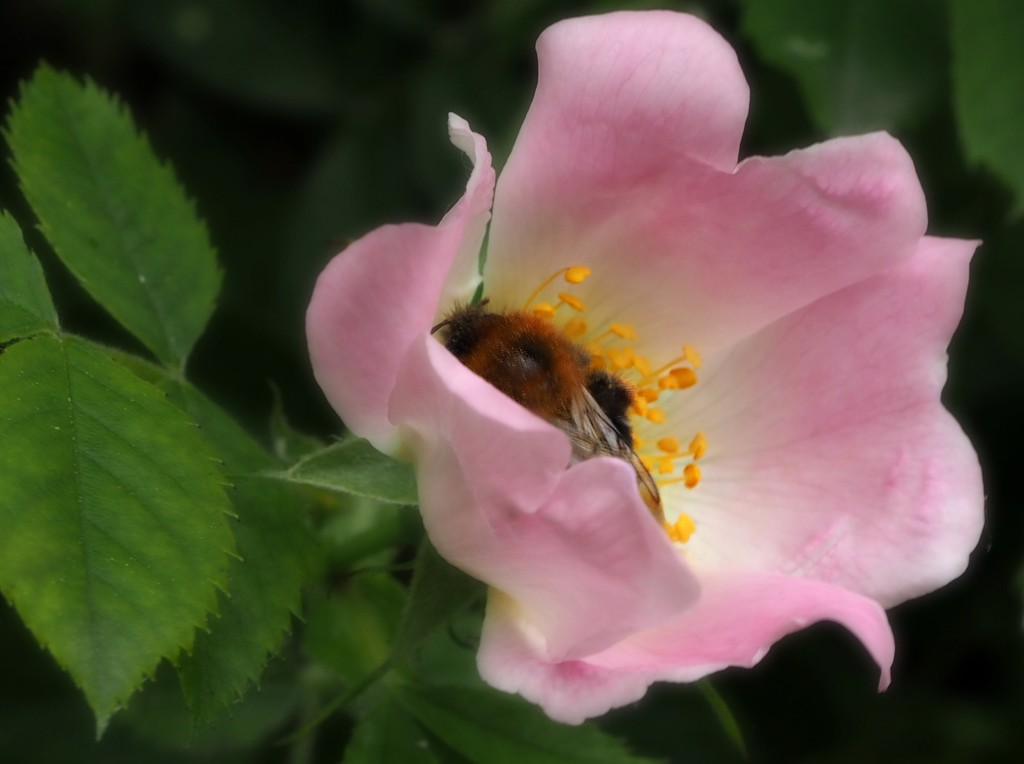 collecting pollen by janemartin