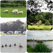 6th Jun 2018 - Stretton Lakes